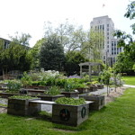 Vancouver City Hall Community Garden Project