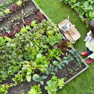 Premium planter growing media and soil