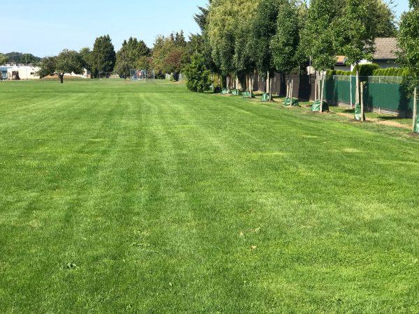 Rootzone - Web - Sports field - Hawthorne Park (3)