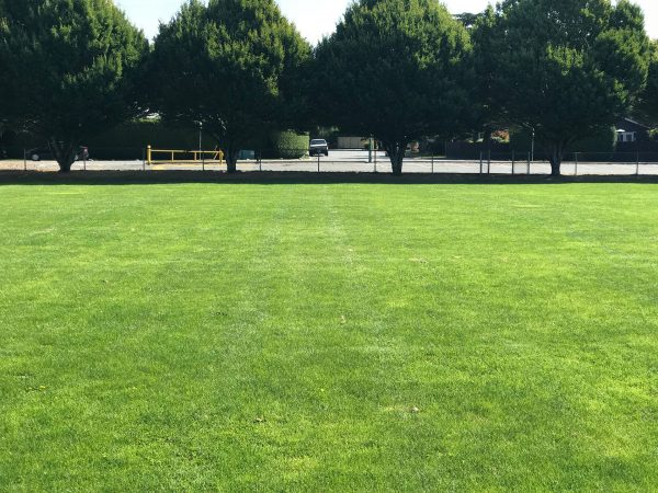 Rootzone - Web - Sports field growing media