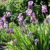 Thrive amender soil for gardens planters