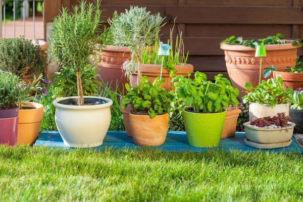 Growing media for planters