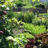 Vegetable Blend Growing Media for Veggie & Herb Gardens