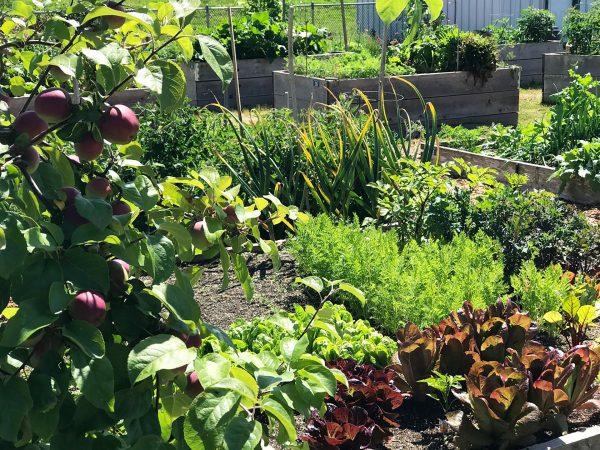 Vegetable Blend Growing Media for Veggie & Herb Gardens