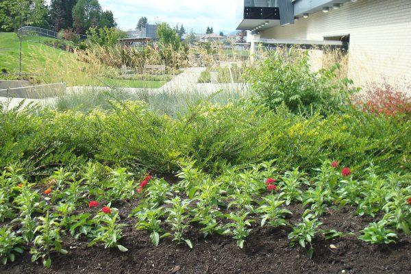 terra - Planter growing media