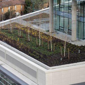 tierraLITE - Green Roof Growing Media