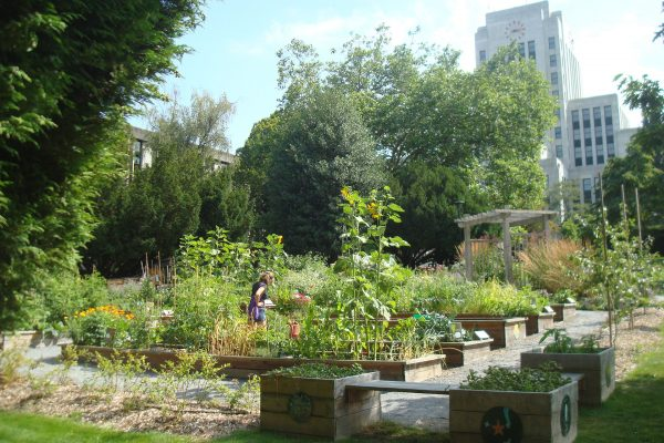 urbanGRO growing media or organic or urban farming